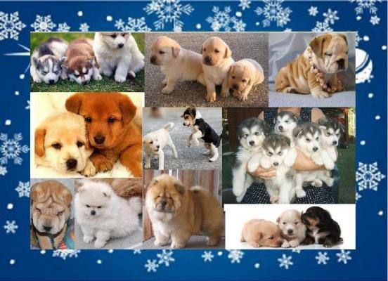 """Immagine di """"Campagna contro l'abbandono dei cuccioli"""""""